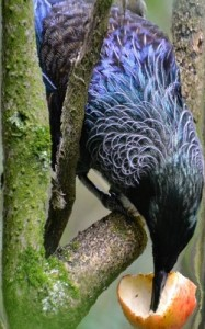 oiseauRedim
