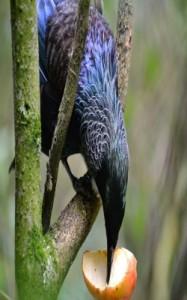 oiseauReduit